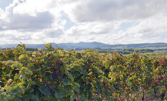 Weingut Pfalzgraf
